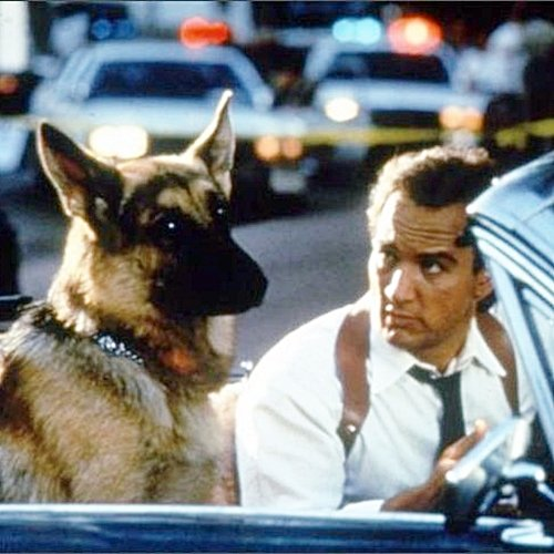 5 20 9 Fantastically Furry Facts About The Brilliant K-9!