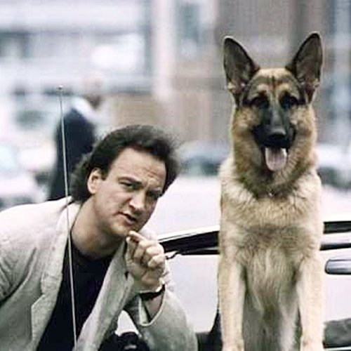 6 17 9 Fantastically Furry Facts About The Brilliant K-9!