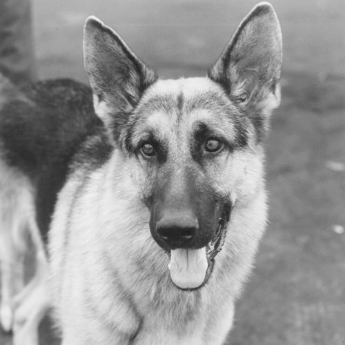 8 19 9 Fantastically Furry Facts About The Brilliant K-9!