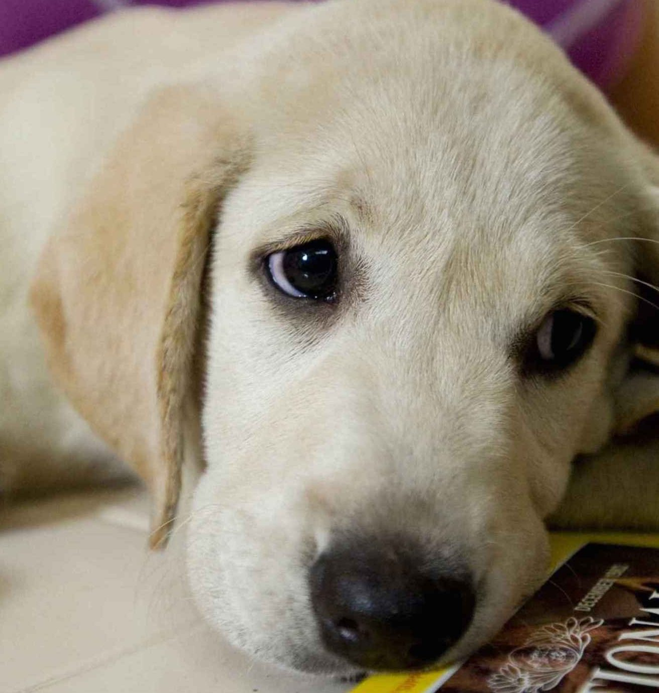 Marley and Me e1582802992325 20 Unbelievable Films You Didn't Know Were Actually Based On True Stories