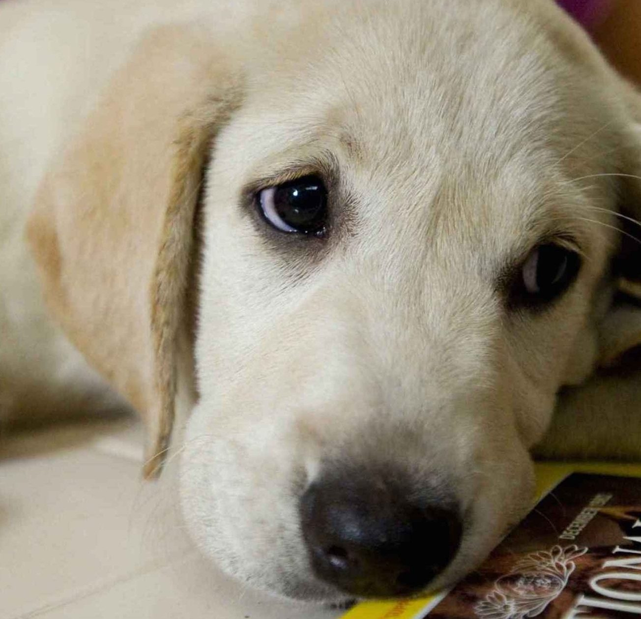 Marley and Me e1597750795408 20 Unbelievable Films You Didn't Know Were Actually Based On True Stories