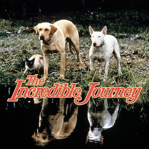 10 11 10 Heartwarming Facts About 1993's Homeward Bound: The Incredible Journey
