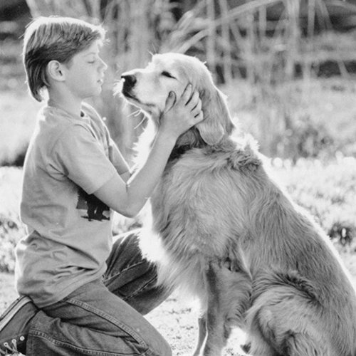 2 14 10 Heartwarming Facts About 1993's Homeward Bound: The Incredible Journey
