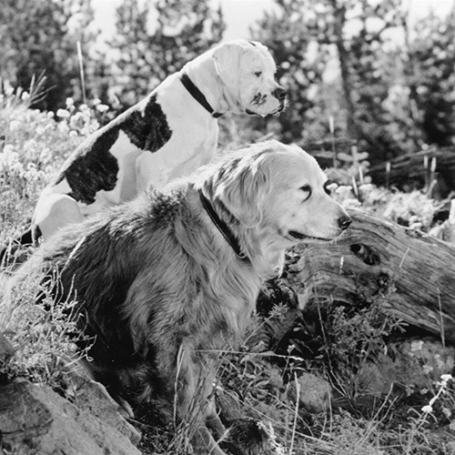 3 10 10 Heartwarming Facts About 1993's Homeward Bound: The Incredible Journey