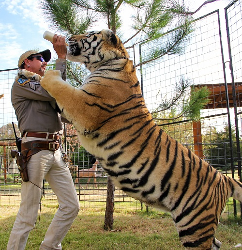 200330 joe exotic tiger king ew 541p 92dfb712f7999a075fa7b3f100c12180 Carole Baskin Awarded Control Of 'Tiger King' Joe Exotic's Zoo In Court Ruling