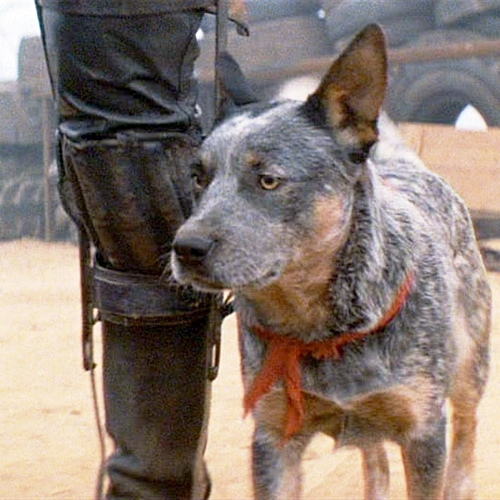 6 13 10 Things You Probably Didn't Know About Mad Max 2: The Road Warrior