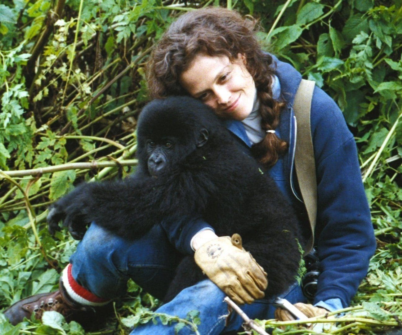 ViewerGuide Gorillas e1609770435825 20 Things You Probably Didn't Know About Sigourney Weaver