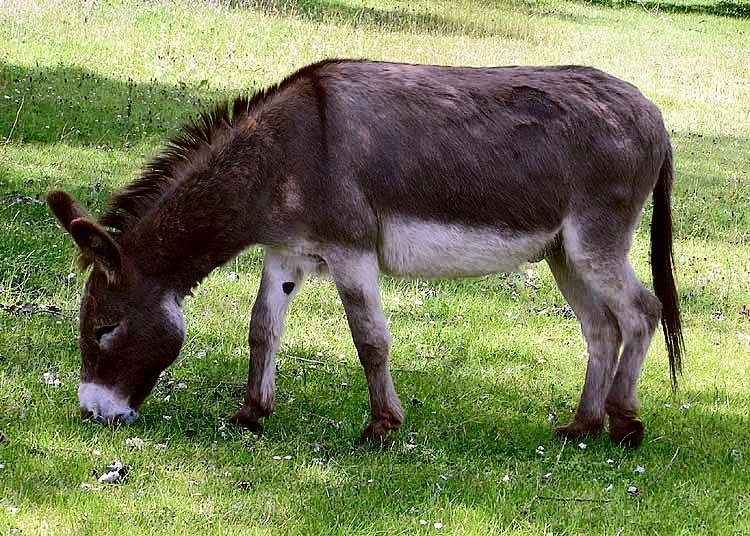 Donkey in Clovelly North Devon England 10 Things You Never Knew About New Order