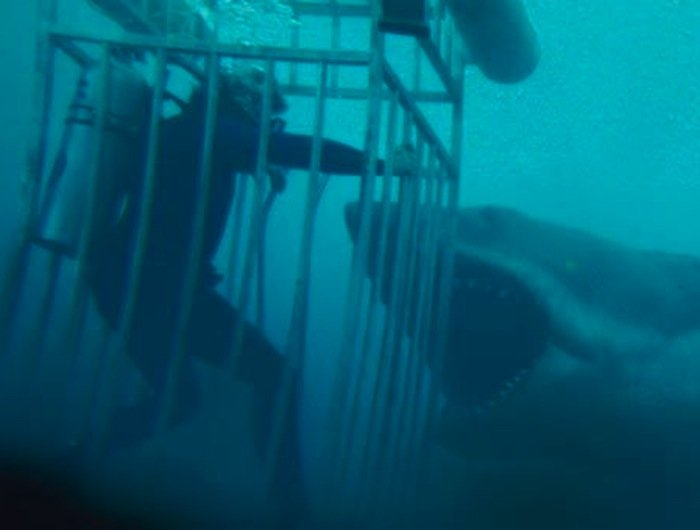 26548 26518 jaws 11 shark cage 27 Things You Didn't Know About Jaws