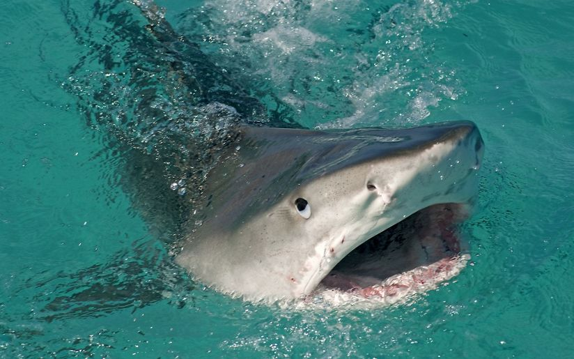 tnc 32552089 27 Things You Didn't Know About Jaws