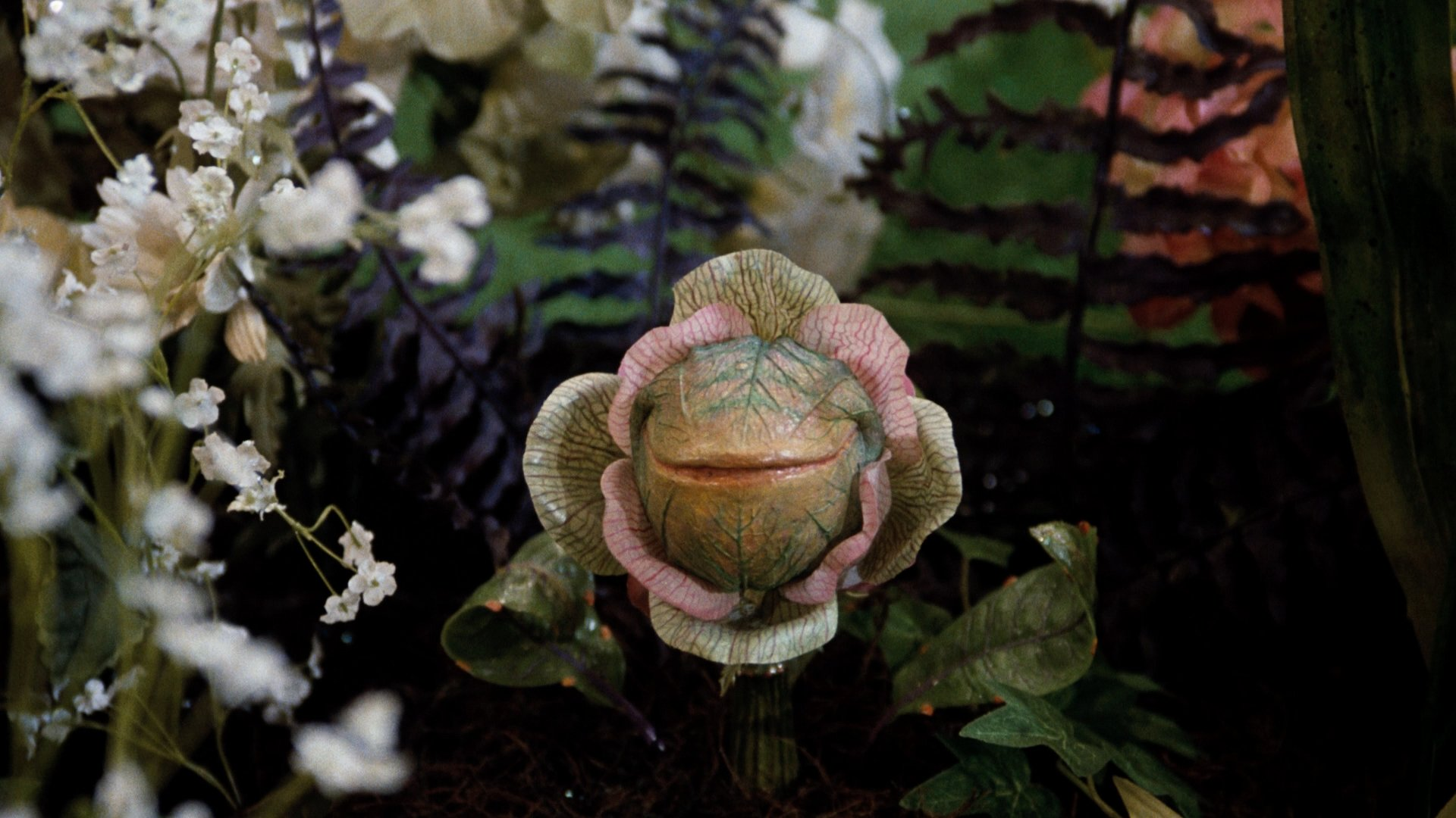 17 25 Things You Never Knew About Little Shop of Horrors